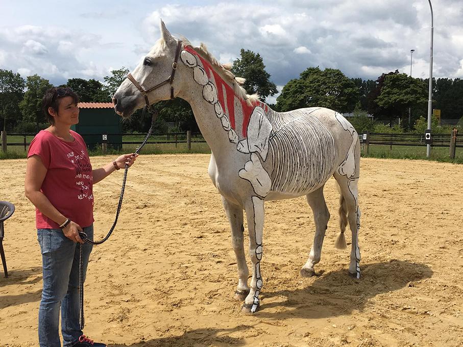 Aktuelles :: Pferdephysiotherapie Christine Clanzett